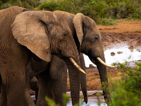 addo-elephant-national-park-near-good-hope-farm-bnb